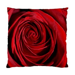 Beautifully Red Standard Cushion Case (one Side)  by timelessartoncanvas