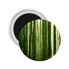 Bamboo Grove 2 2 25  Magnets by trendistuff