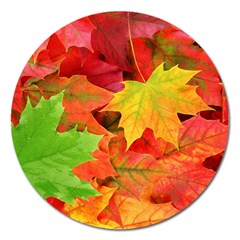 Autumn Leaves 1 Magnet 5  (round) by trendistuff
