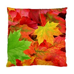 Autumn Leaves 1 Standard Cushion Cases (two Sides)  by trendistuff