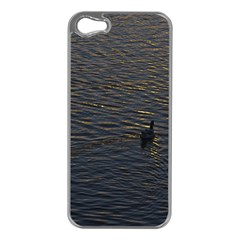 Lonely Duck Swimming At Lake At Sunset Time Apple Iphone 5 Case (silver) by dflcprints