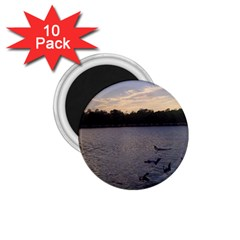Intercoastal Seagulls 3 1 75  Magnets (10 Pack)  by Jamboo