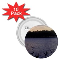 Intercoastal Seagulls 3 1 75  Buttons (10 Pack)