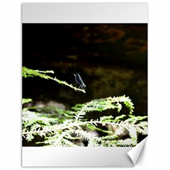 Nature s Stare Canvas 18  X 24   by Naturesfinest