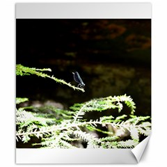 Nature s Stare Canvas 8  X 10  by Naturesfinest