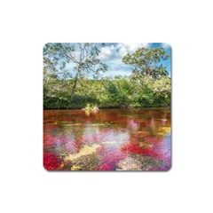 Cano Cristales 3 Square Magnet by trendistuff