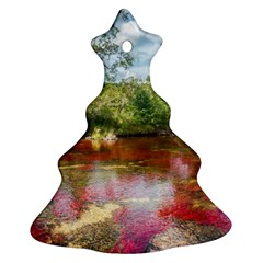 Cano Cristales 3 Ornament (christmas Tree) by trendistuff