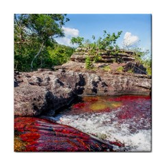 Cano Cristales 2 Tile Coasters by trendistuff