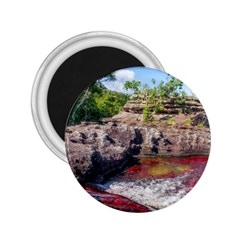 Cano Cristales 2 2 25  Magnets by trendistuff