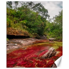 Cano Cristales 1 Canvas 8  X 10  by trendistuff