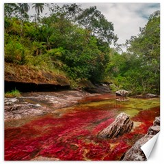 Cano Cristales 1 Canvas 12  X 12   by trendistuff