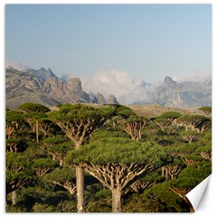 Socotra, Yemen Canvas 12  X 12   by trendistuff