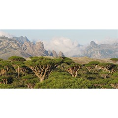 Socotra, Yemen You Are Invited 3d Greeting Card (8x4)