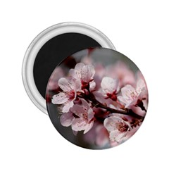 Plum Blossoms 2 25  Magnets by trendistuff