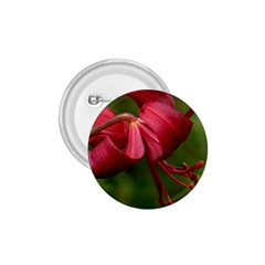 Lilium Red Velvet 1 75  Buttons by trendistuff