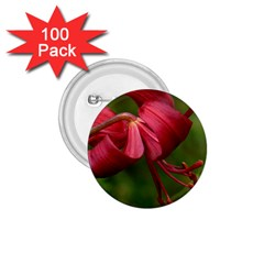 Lilium Red Velvet 1 75  Buttons (100 Pack)  by trendistuff