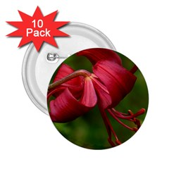 Lilium Red Velvet 2 25  Buttons (10 Pack)  by trendistuff