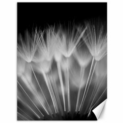 Dandelion Canvas 36  X 48   by trendistuff