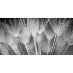 Dandelion You Are Invited 3d Greeting Card (8x4)  by trendistuff
