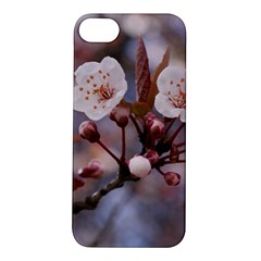 Cherry Blossoms Apple Iphone 5s Hardshell Case by trendistuff