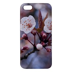 Cherry Blossoms Iphone 5s Premium Hardshell Case by trendistuff