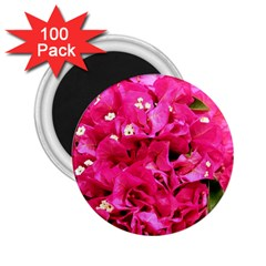 Bougainvillea 2 25  Magnets (100 Pack)  by trendistuff
