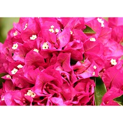 Bougainvillea Birthday Cake 3d Greeting Card (7x5)  by trendistuff