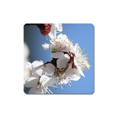 Apricot Blossoms Square Magnet by trendistuff