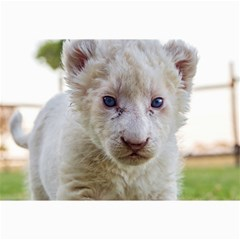 White Lion Cub Collage 12  X 18