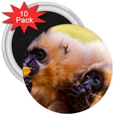 Two Monkeys 3  Magnets (10 Pack)  by trendistuff
