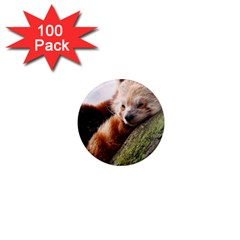 Red Panda 1  Mini Magnets (100 Pack)  by trendistuff