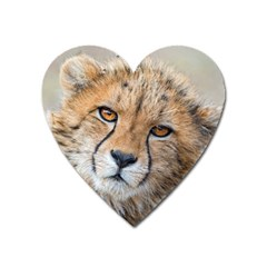 Leopard Laying Down Heart Magnet by trendistuff