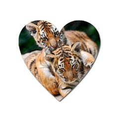 Baby Tigers Heart Magnet by trendistuff