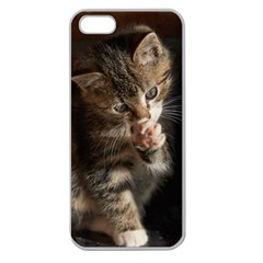 Talk To The Paw Apple Seamless Iphone 5 Case (clear) by trendistuff