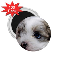 Sad Puppy 2 25  Magnets (100 Pack)  by trendistuff