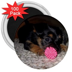 Puppy With A Chew Toy 3  Magnets (100 Pack) by trendistuff
