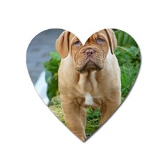 Cute Wrinkly Puppy Heart Magnet by trendistuff