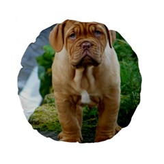 Cute Wrinkly Puppy Standard 15  Premium Flano Round Cushions by trendistuff