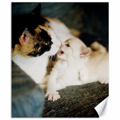Calico Cat And White Kitty Canvas 8  X 10