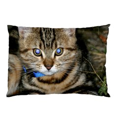 Blue Eyed Kitty Pillow Cases by trendistuff