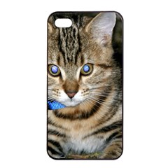 Blue Eyed Kitty Apple Iphone 4/4s Seamless Case (black) by trendistuff