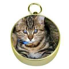 Blue Eyed Kitty Gold Compasses by trendistuff