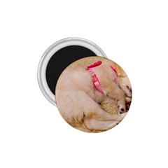Adorable Sleeping Puppy 1 75  Magnets by trendistuff