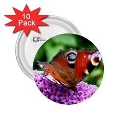 Peacock Butterfly 2 25  Buttons (10 Pack)  by trendistuff