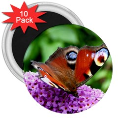 Peacock Butterfly 3  Magnets (10 Pack)  by trendistuff