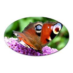 Peacock Butterfly Oval Magnet by trendistuff