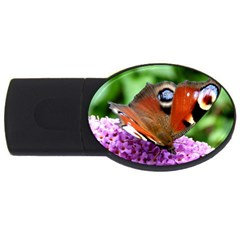 Peacock Butterfly Usb Flash Drive Oval (2 Gb)  by trendistuff