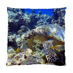 Sea Turtle Standard Cushion Case (one Side)  by trendistuff