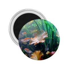 Marine Life 2 25  Magnets by trendistuff