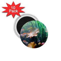 Marine Life 1 75  Magnets (10 Pack)  by trendistuff